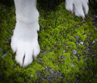 Dog on moss