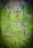 Moss man