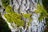 Moss on bark