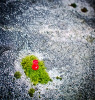 Moss on rock