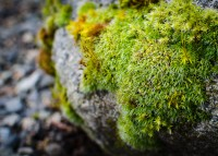 Moss on rock 3