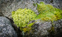 Moss on rock 5