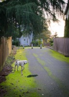 Mossy path and dog