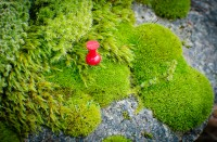 Pinteresting moss