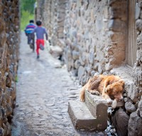 The two boys had far more energy than the dog. Ollantaytambo, Peru.
