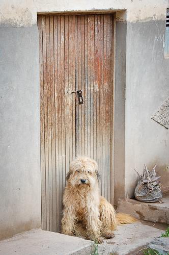 Ollanta dog in doorway