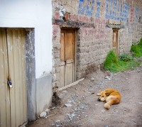 I wish I could sleep anywhere...Ollantaytanbo, Peru.