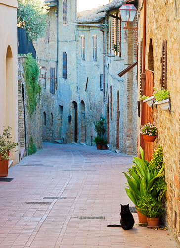 Cat on street in San Gimignano, Italy