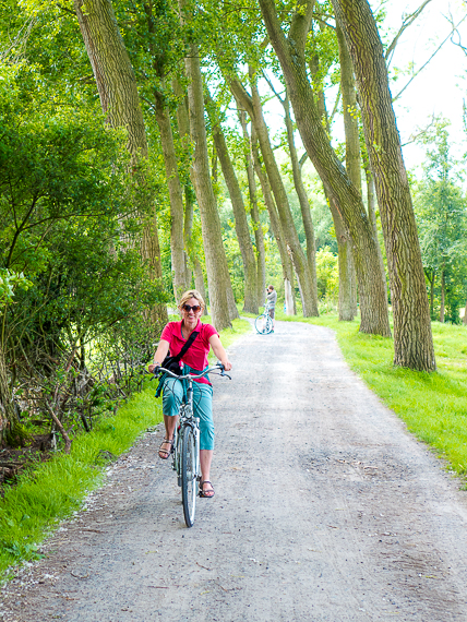 bent trees and bikes near Bruges