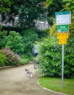 Dog and Bike - Frankfurt