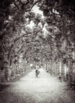 Plane Trees and Bike - Frankfurt
