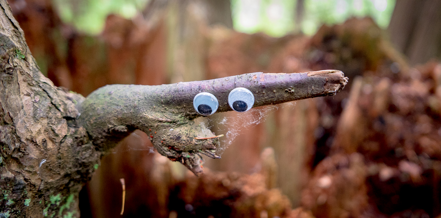 Who would know? Eyes on branch