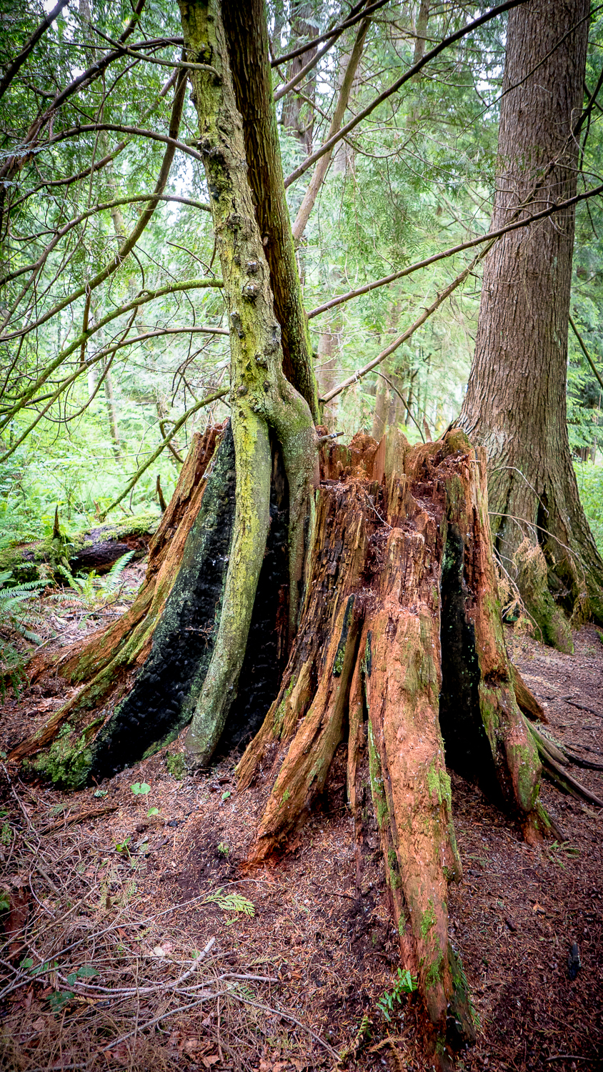 Who would know? Tree stump